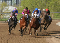 horse racing software, handicapping horses, horse software, handicapping horse races